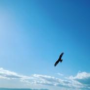 真の自分らしさが目覚めると鳥肌たちまくりの毎日になるよ。